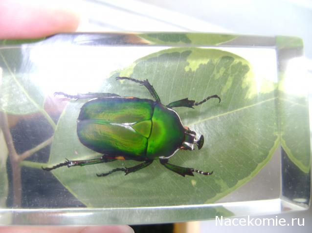 насекомые и их знакомые журнал 4