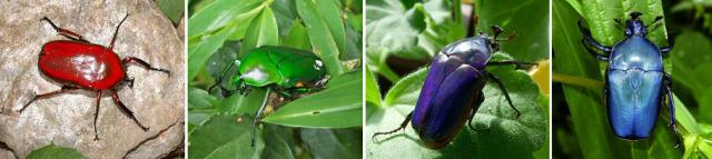 брюнетка голубыми сон большой зеленый жук Хатая