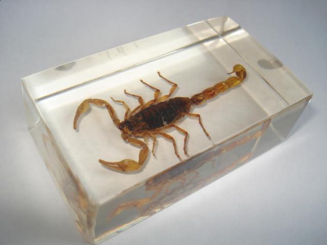 Скорпионы во сне означают лживых друзей наяву или символизируют ваши негативные чувства по отношению к самому себе (вину, страх, стыд и т.п.).