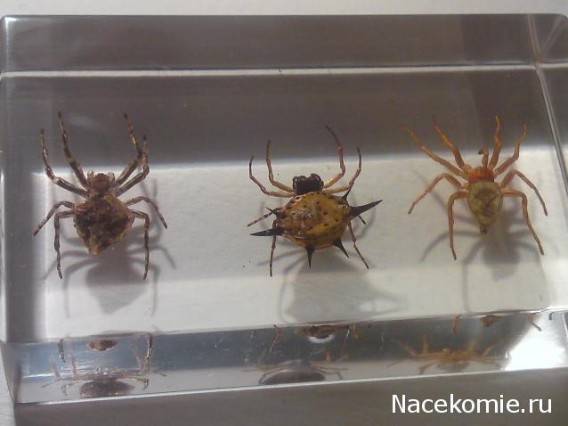 коллекция насекомые и их знакомые график выхода