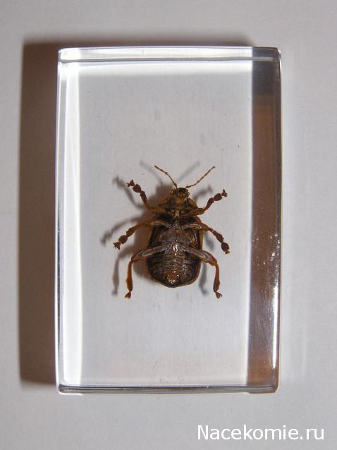 настоящие насекомые и их знакомые no 31