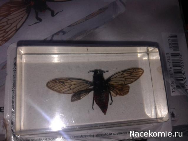 насекомые и их знакомые выпуск 38
