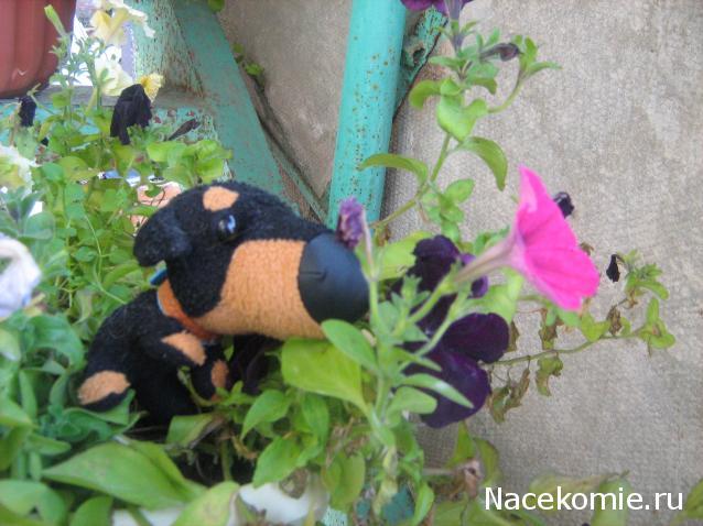 комментарий к фото с цветами: