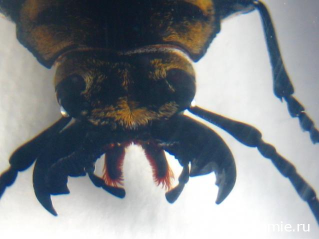 журнал насекомые и их знакомые скачать
