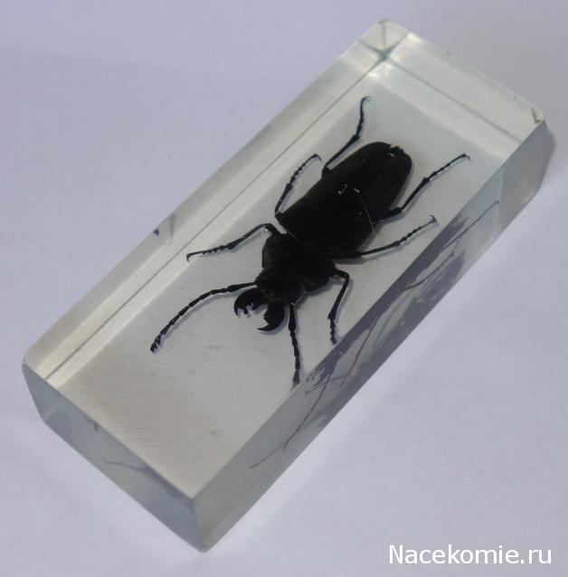 насекомые и их знакомые скачать весь
