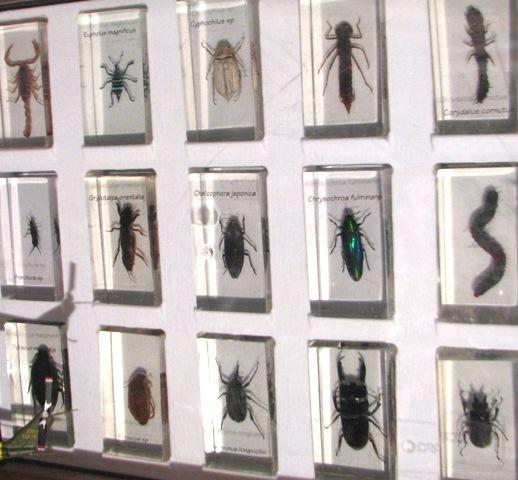 и их знакомые5выпускшэршани насекомые