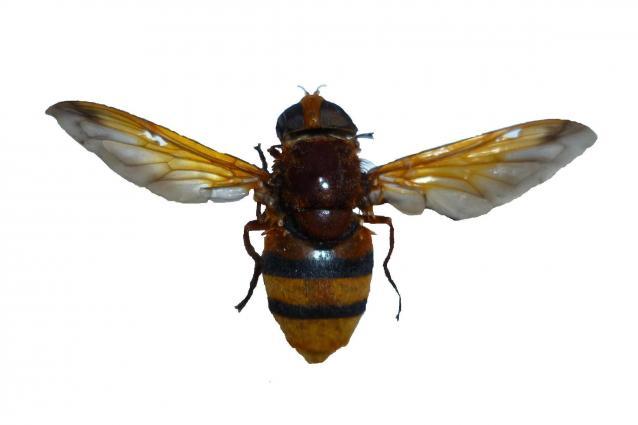 журнал насекомые и их знакомые 2013
