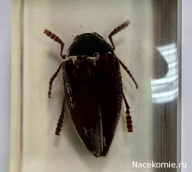 насекомые и их знакомые скакун фото