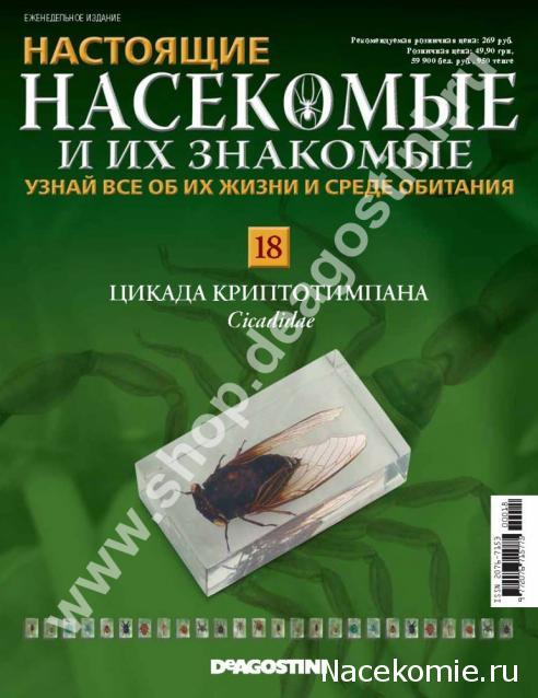 Насекомые №15 - Златка Восточная (Sternocera orientalis)