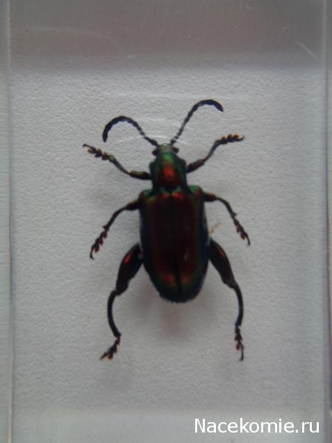 листоед насекомые прыгун фото их знакомые и