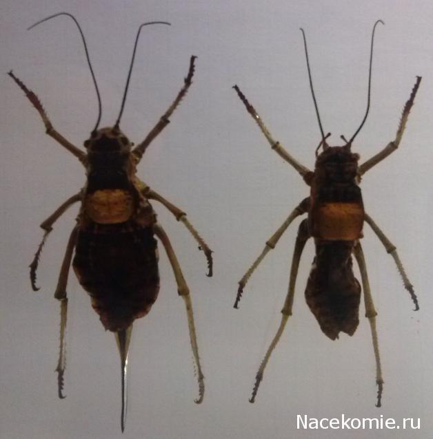 насекомые и их знакомые 45 выпуск
