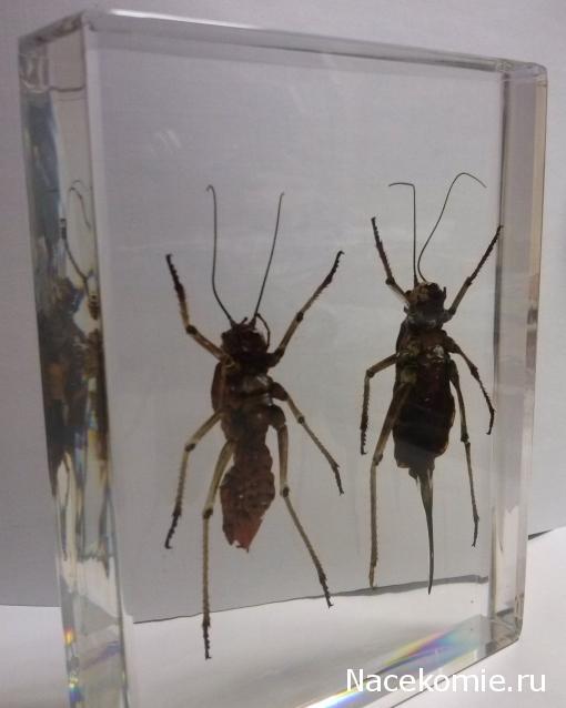 выпуск журналов насекомые и их знакомые