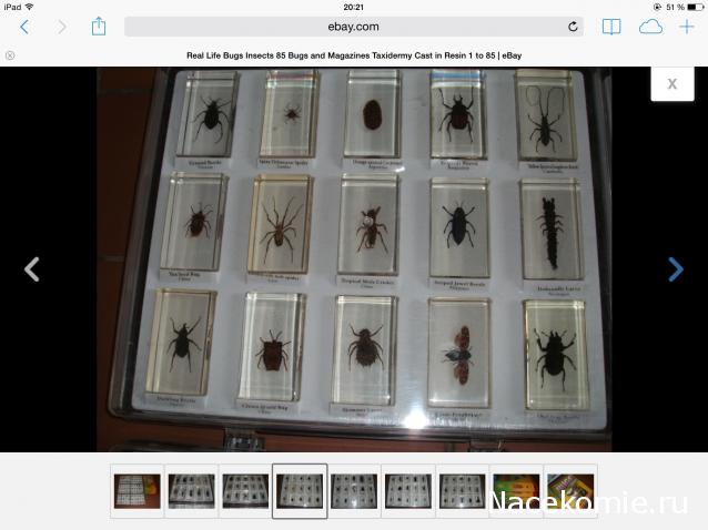 насекомые и их знакомые график выхода 2013