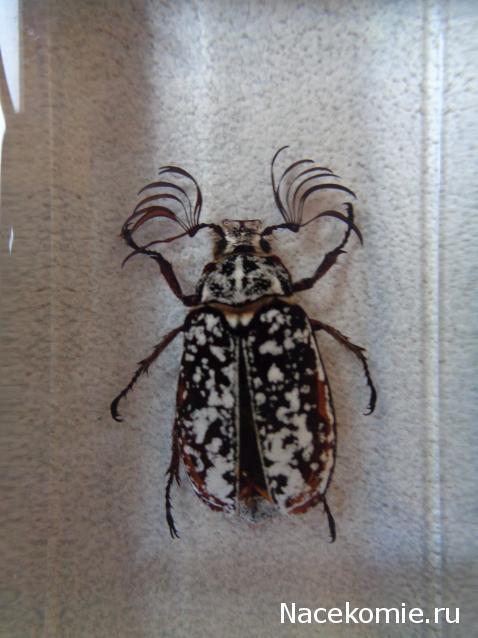 насекомые их знакомые форум