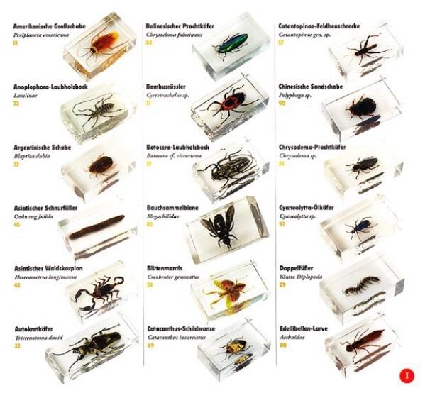 график выхода журналов насекомые и их знакомые