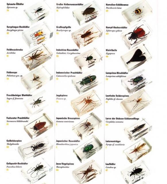 журнал насекомые и их знакомые график выхода