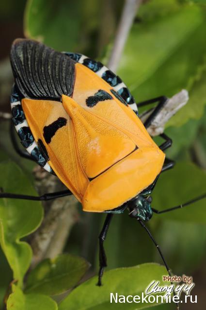 насекомые и их знакомые 2015 бабочки