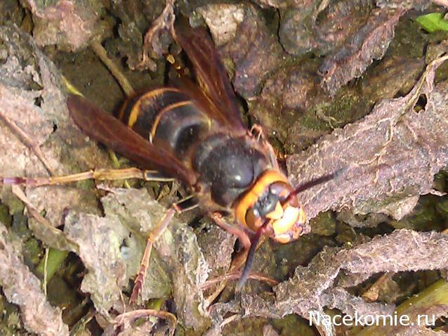 насекомые и их знакомые 71
