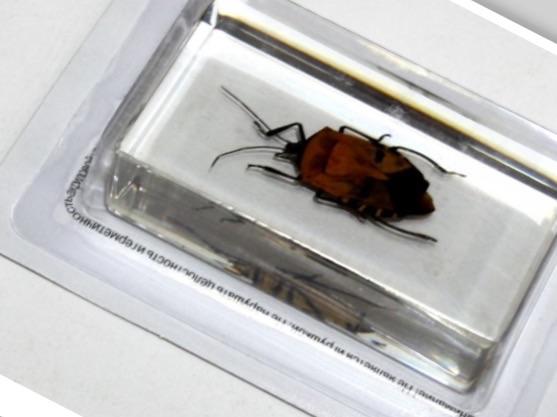 деагостини насекомые и их знакомые 2014 все выпуски
