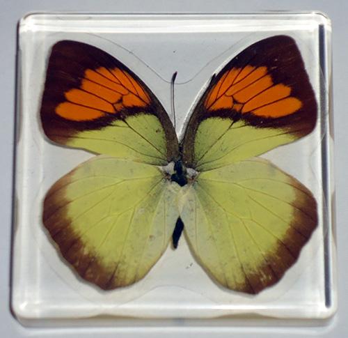 футляр для насекомые и их знакомые