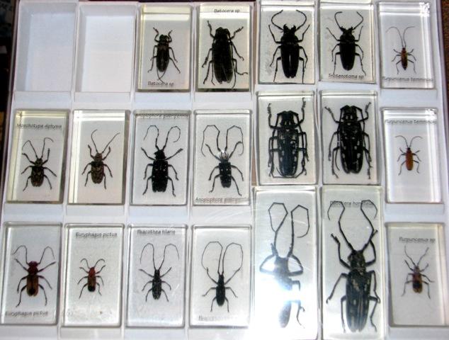 насекомые и их знакомые 2014 все выпуски график выхода