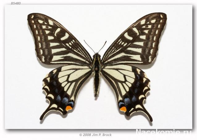 деагостини насекомые и их знакомые бабочки