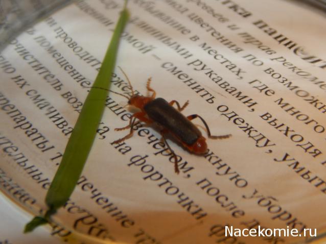 насекомые и их знакомые 44