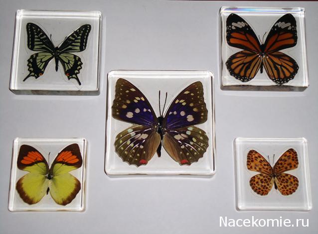 график выхода 2015 насекомые и их знакомые