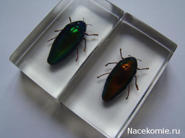 насекомые и их знакомые перезапуск
