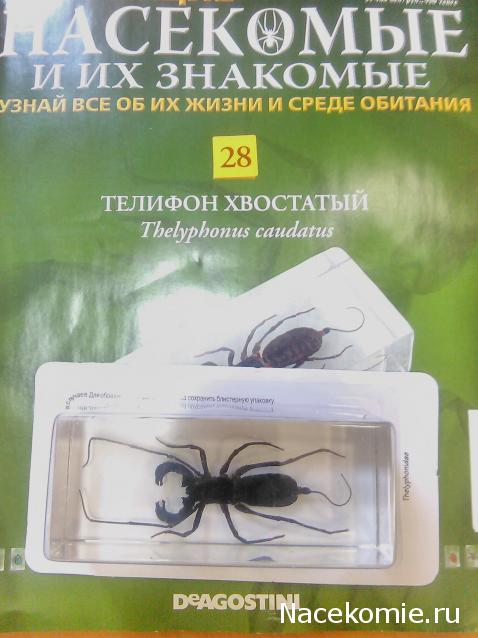 знакомые выпуск их насекомые 11 и