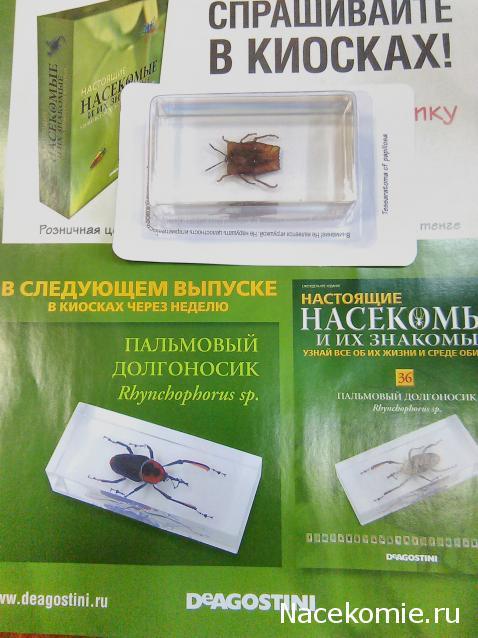 20 и выпуск знакомые насекомые их настоящие