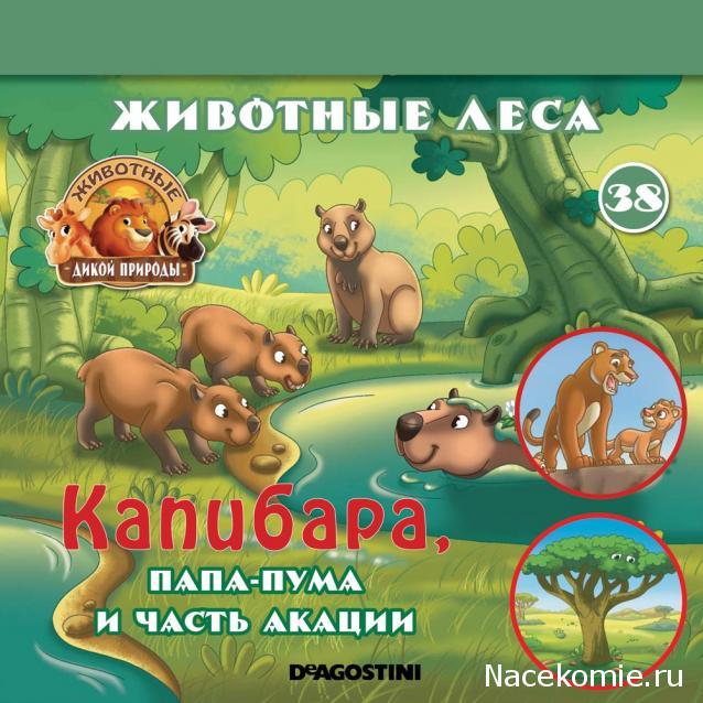 Животные Дикой Природы №38 - Самец Пумы Перри и часть акации