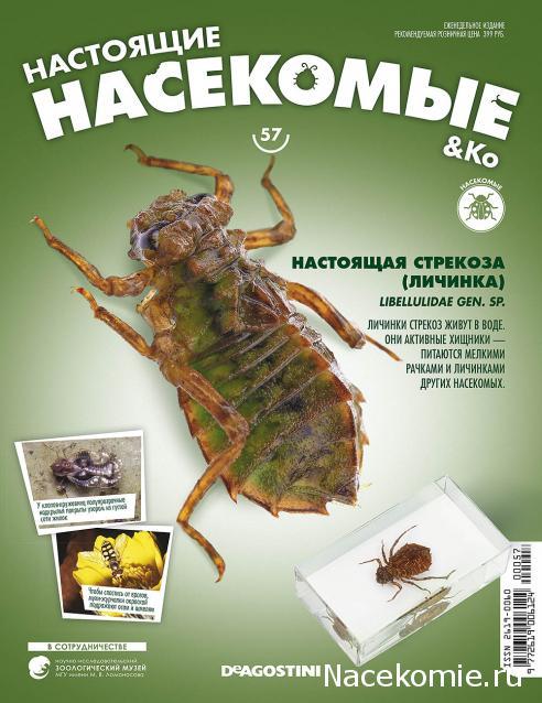 Насекомые & Ко №57 - Настоящая Стрекоза (личинка)