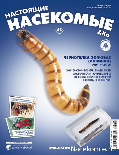 Насекомые & Ко №58 - Чернотелка Зофобас (личинка)