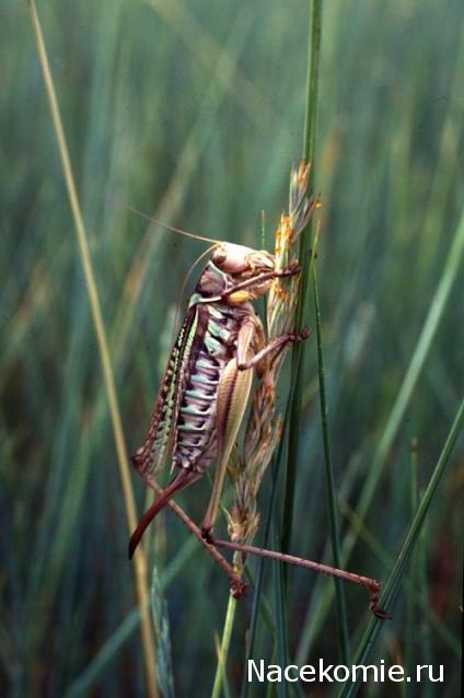 насекомые и их знакомые 45