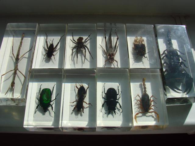 насекомые и их знакомые 24