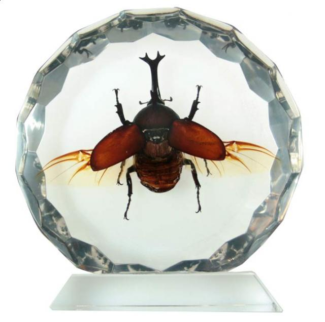 Как сделать насекомое в акриле