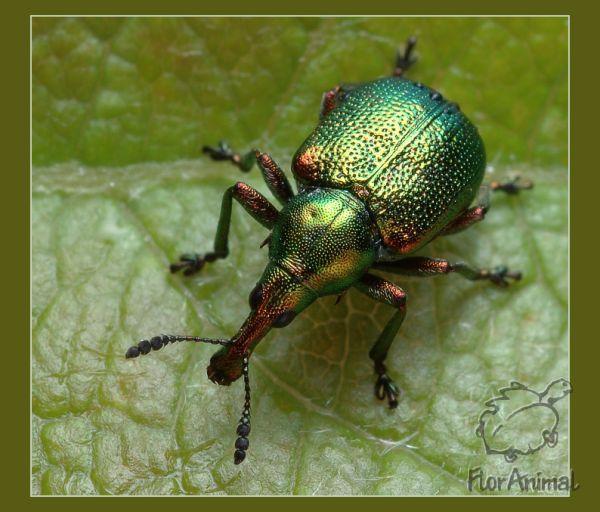 азбука насекомых и их знакомых