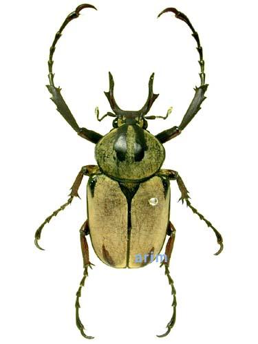 насекомые и их знакомые 13