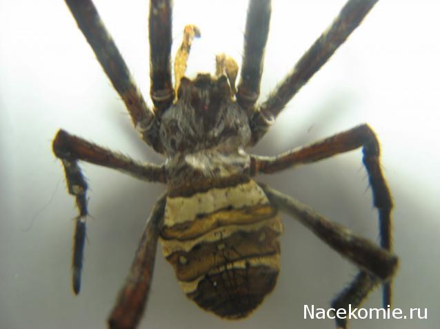 пауки и их знакомые