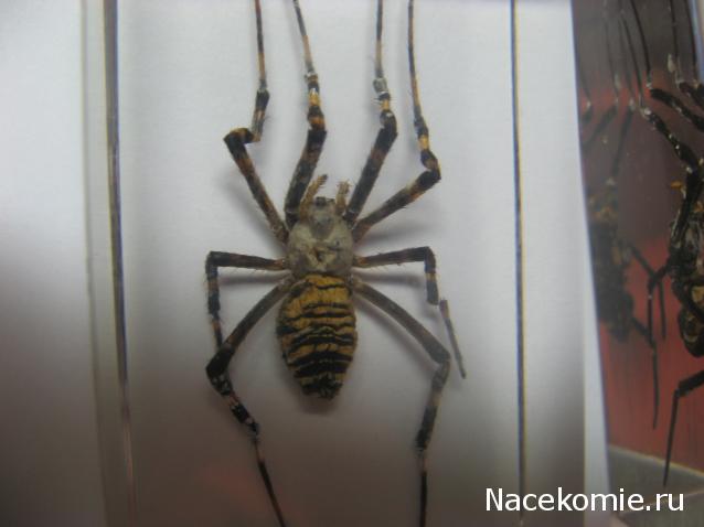 палочник насекомые и их знакомые