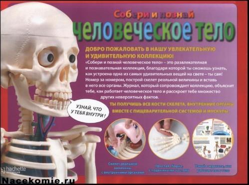 """Журнал Собери и познай """"Человеческое тело"""""""