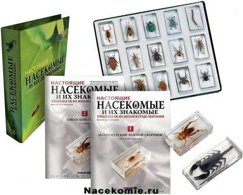 насекомые и их знакомые полная коллекция
