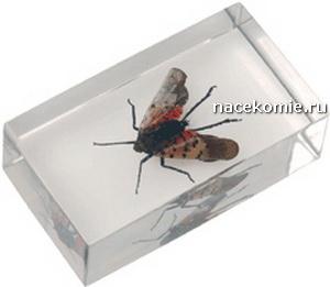 Выпуск №7 Lycorma delicatula