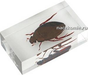 насекомые и их знакомые сколопендра