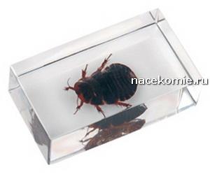 Выпуск №25 Китайский таракан Польская серия Насекомые и их знакомые