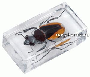 насекомые и их знакомые 2010 журналы