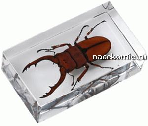 настоящие насекомые и их знакомые 3 выпуск
