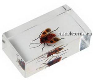насекомые и их знакомые специальный выпуск