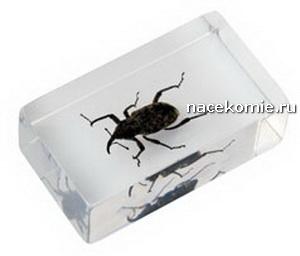 насекомые и их знакомые польская коллекция